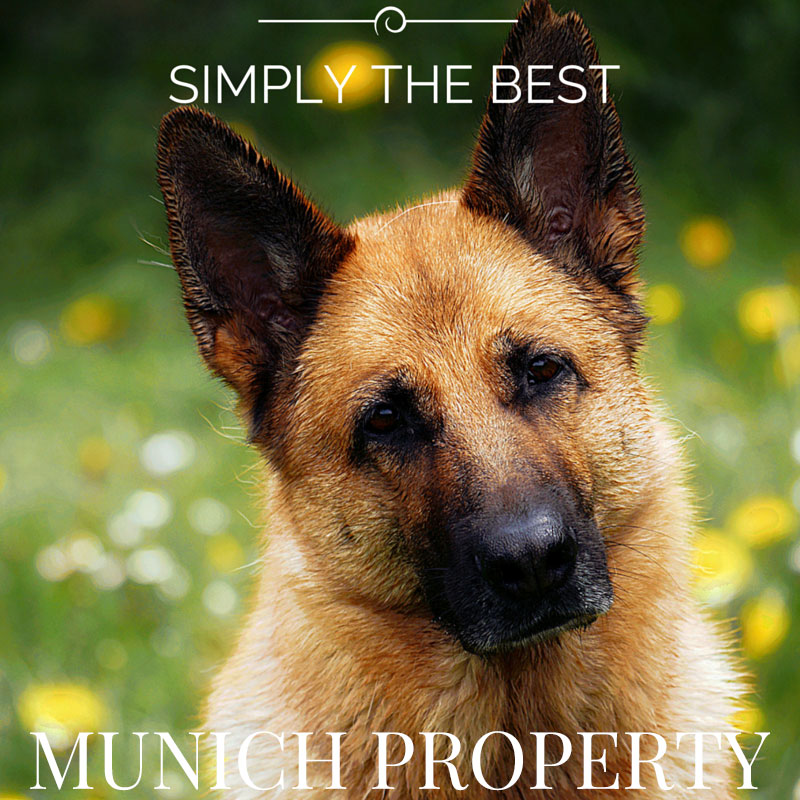Property Dog